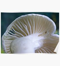 White Wax Cap Poster