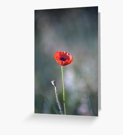 We Will Remember Our Fallen Heroes... Greeting Card