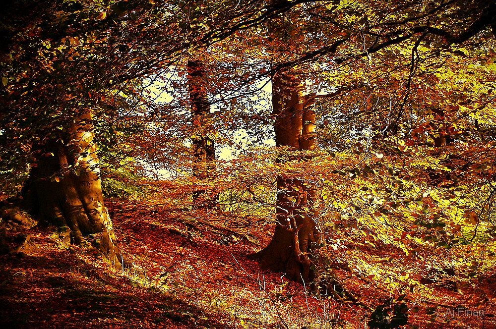 Autumn's Golden Glow. by Aj Finan