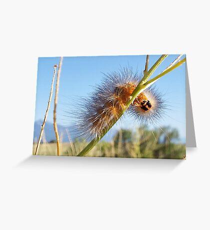 Fuzzy Catapillar Greeting Card