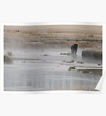 Yellowstone Grizzly - Wyoming USA Poster
