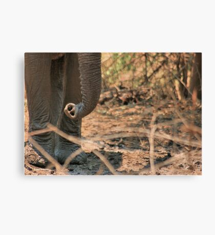 SERIES: UP-CLOSE & PERSONAL, WITH THE ELEPHANT 2 Canvas Print
