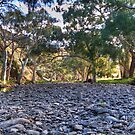 Flinders .. or Murraylands????? by Dave  Hartley