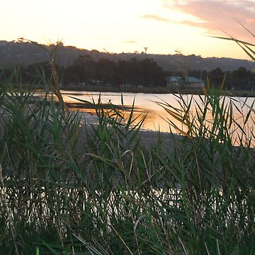 Reeds at Narrabeen Lakes by SydneyChef