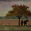 Under the Tree by Jean-Pierre Ducondi