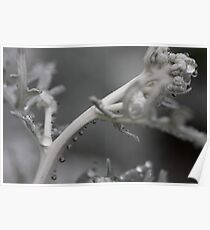 Bubbles on a Branch Poster