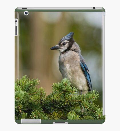 Blue Jay in Spruce Tree - Ottawa, Ontario iPad Case/Skin