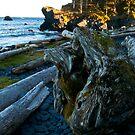 Kodiak Beach by Ken Scarboro