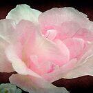 Pretty in Pink ©  by Dawn Becker