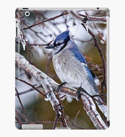 Blue Jay on Ice Covered Branch - Ottawa, Ontario iPad Case/Skin