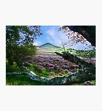Hawnby Moor #7 Photographic Print