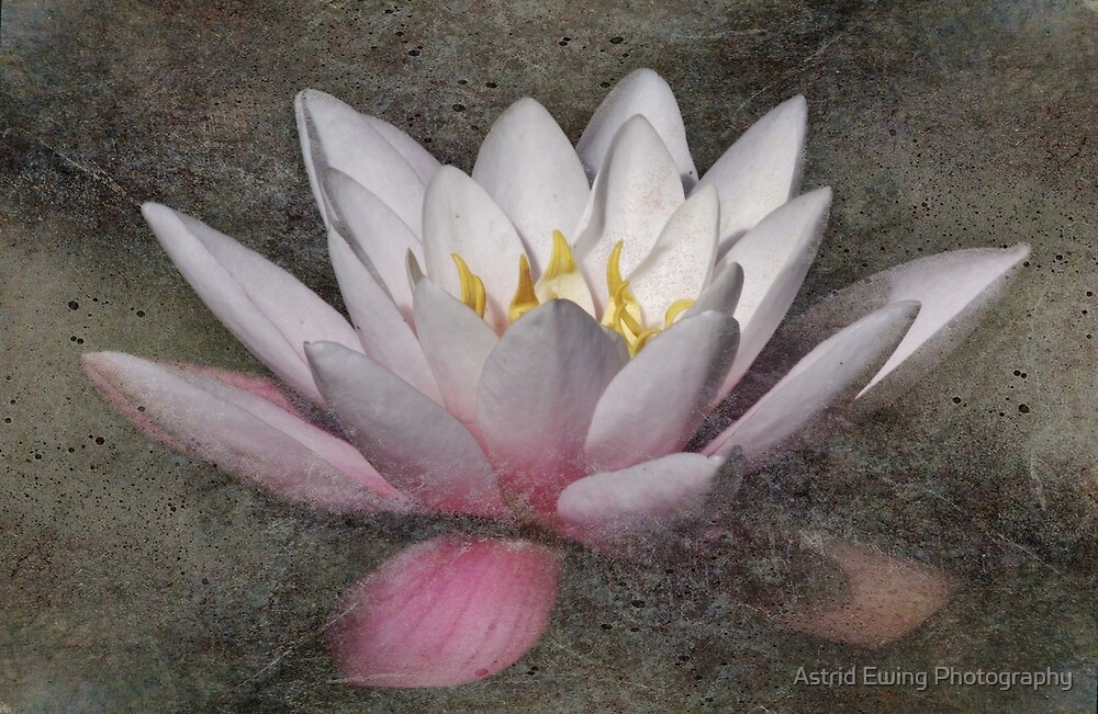 Textured Water Lily by Astrid Ewing Photography