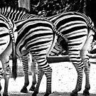 Contrast Bums - Taronga Zoo Sydney by Kirstie Dux