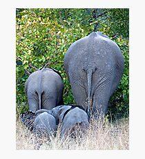 Elephant Roadblock Photographic Print