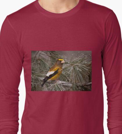 Evening Grosbeak On Pine 2 T-Shirt