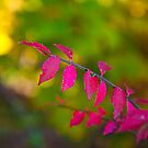 The Pink Leaves by ericseyes