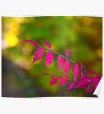 The Pink Leaves Poster