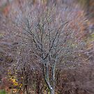 A Tree in Late Autumn by Lynn Wiles
