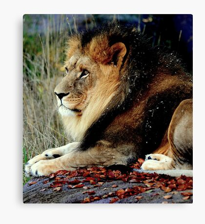 The wind is in from Africa, last night I couldn't sleep, Canvas Print