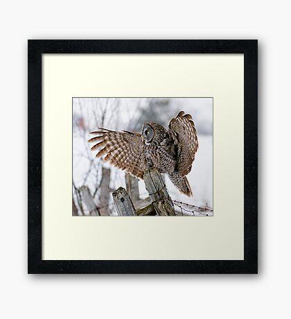 Great Grey Owl - Dunrobin, Ontario Framed Print