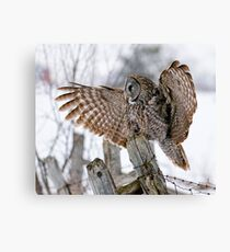 Great Grey Owl - Dunrobin, Ontario Canvas Print