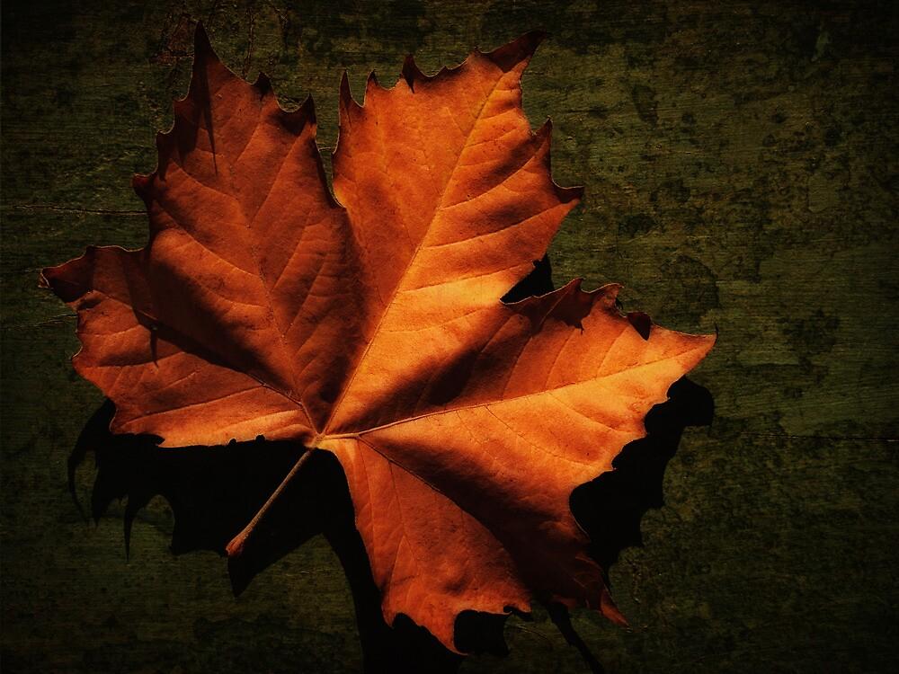 Fallen Leaf by Stephen Morris