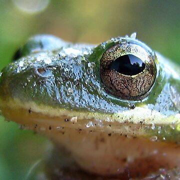 Tree Frog by Heavenandus777