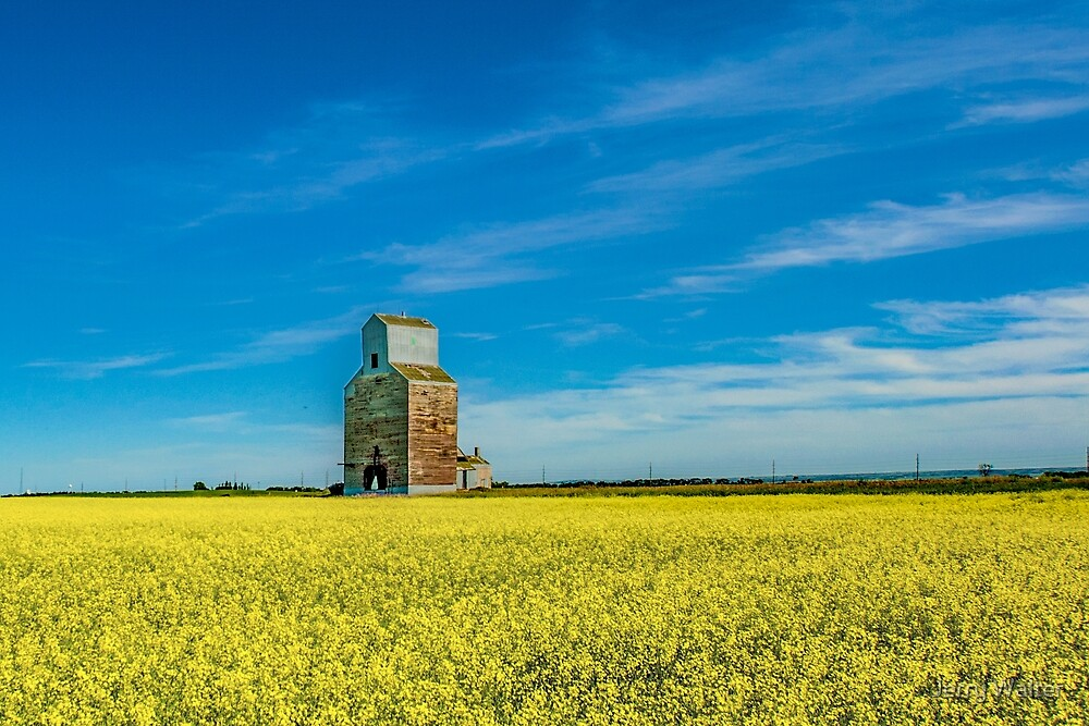 Rival Elevator with Canola Fields by Jerry Walter