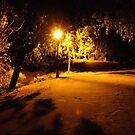 Shadows in the night by Sue Hays