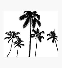 Tropical palms in monochrome Photographic Print