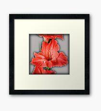 gladiola in pastel tones Framed Print