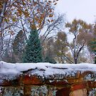 First Colorful Autumn Snow by Bo Insogna