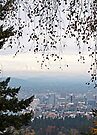 Willamette Valley by Jeff Clark