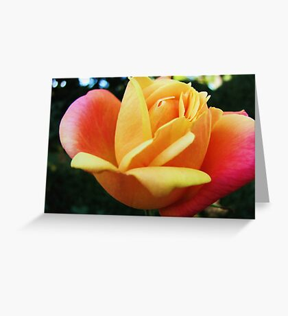 Roses in November Greeting Card