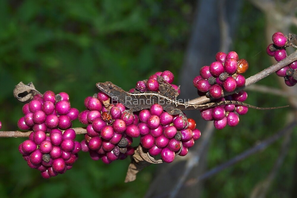 Beauty berry friend by ♥⊱ B. Randi Bailey