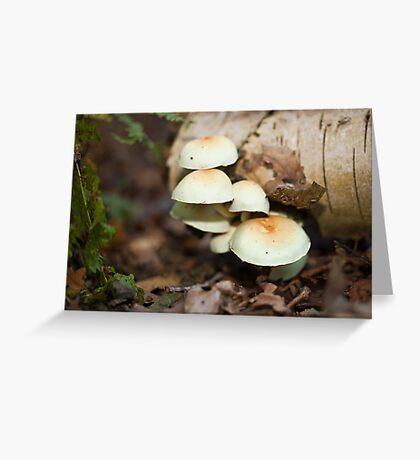Tree Fungi Greeting Card