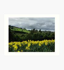 Daffodil fields Art Print