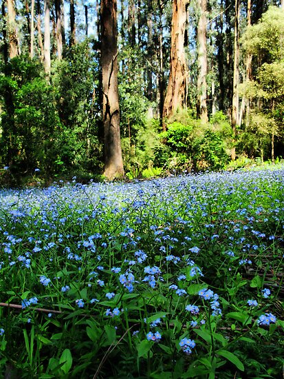 Forget-me-nots by Robyn Lakeman