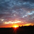 Last Sun by Linda Miller Gesualdo