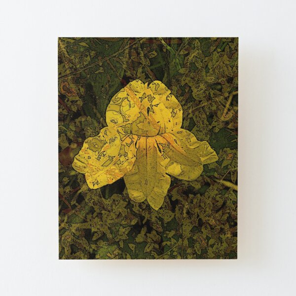 Goodenia Flower on Moss Wood Mounted Print