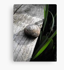 Simplistic Beauty Canvas Print
