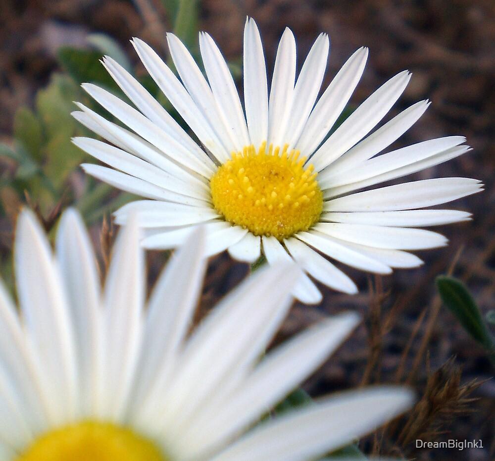 Daisy Day by DreamBigInk1