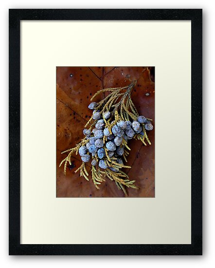 Evergreen Berries by Carla Wick/Jandelle Petters