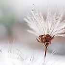 Winter hair by natans