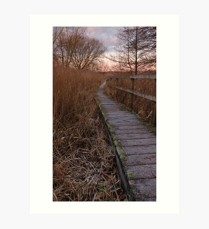 Boardwalk through the marshes Art Print