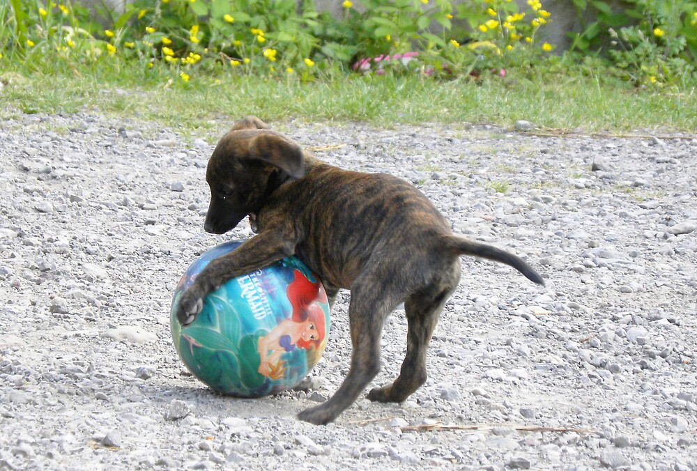 Baby Roxi and Ball !  by rhian mountjoy