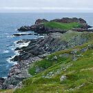 Ferryland Ocean Scene - Newfoundland Canada by Raymond J Barlow