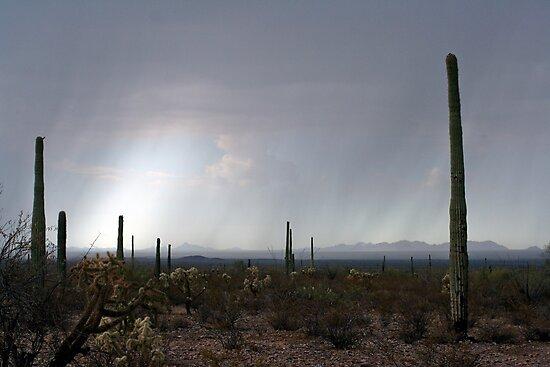 La Abra Plain, Arizona and Sonoita, Sonora, Mexico by Chris Clarke