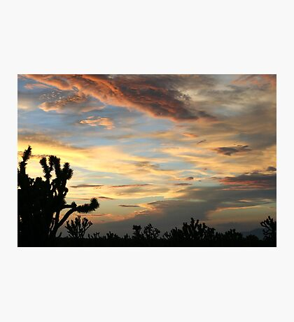 Cima Dome After Storm, Mojave National Preserve, California Photographic Print