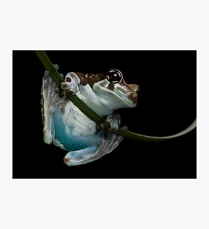 Blue bummed frog Photographic Print